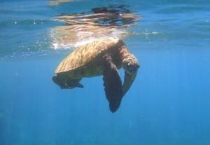 Achtung Schildkröten kreuzen